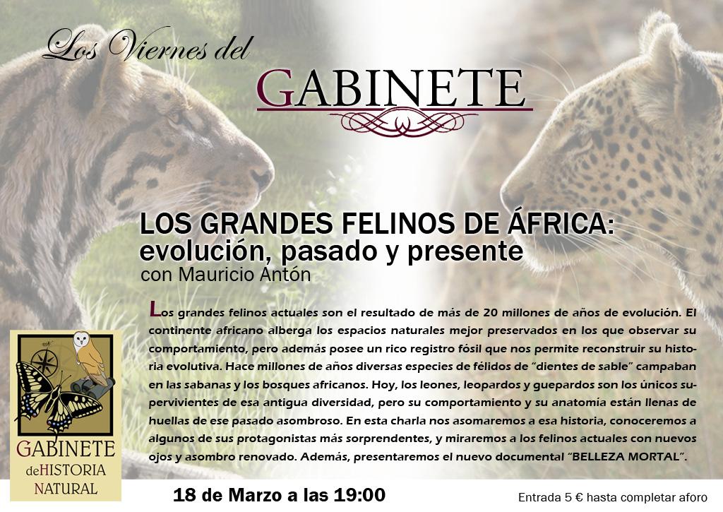 Grandes_Felinos_Gabinete_Historia_Natural