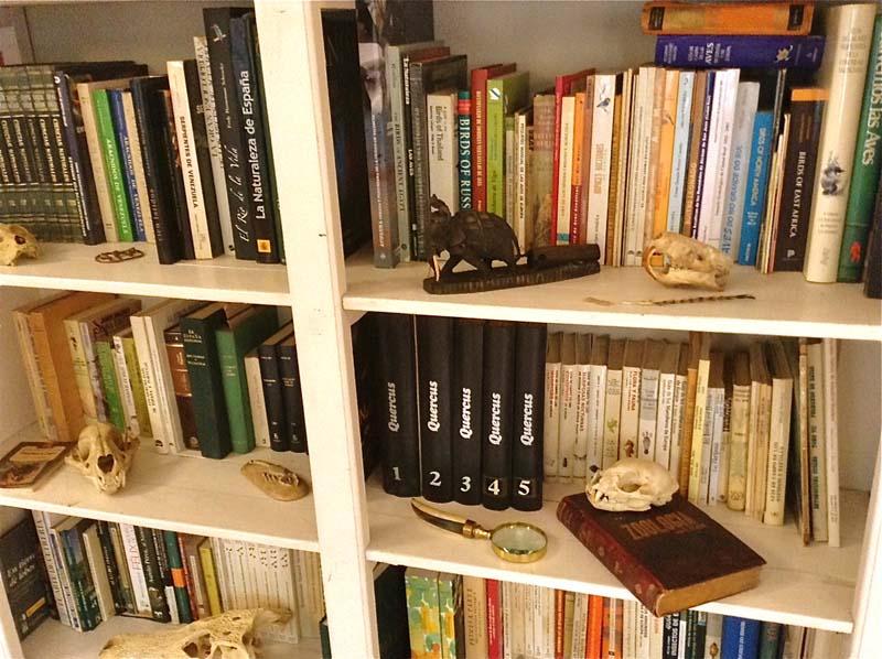 gabinete_historia_natural_11